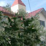 千葉南教会